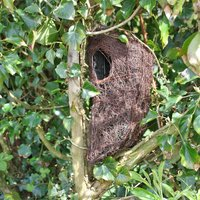 Brushwood Tree Nest Pouch