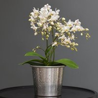 Phalaenopsis White Willd Orchid and hand etched aluminium pl