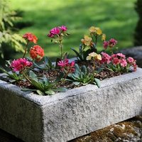 Lewisia collection and large alpine trough