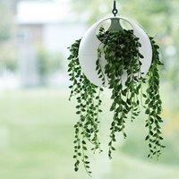 Senecio herreianus Dinter and hanging globe planter
