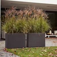 Miscanthus sinensis Kleine Silberspinne and high-sided