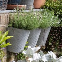 Set of three embossed wall planters and jekkas thyme / thymu