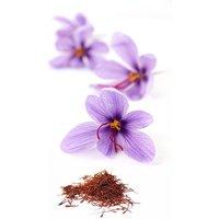Crocus sativus 60 + 30 FREE bulbs