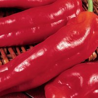 sweet pepper Long Red Marconi approx 75 seeds