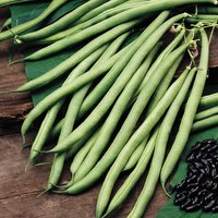 Product photograph showing Bean Climbing French Cobra Approx 50 Seeds