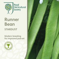 Product photograph showing Bean Runner Stardust Approx 50 Seeds