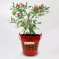 Image of chilli metal fire bucket gift set