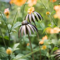 Product photograph showing Echinacea Plant Stake - Antique Bronze Single Long