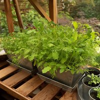 Galvanised planter rectangular 20×30cm