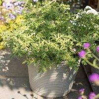 Ribbed zinc planter