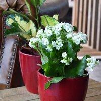 Bordeaux planter 14.5cm