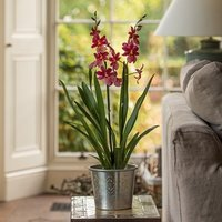 Hand etched aluminium planter and oncidopsis orchid