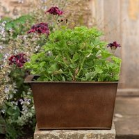 Plant trough and pelargonium Lord Bute