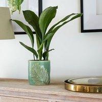 Kew stoneware sago palm planter olive