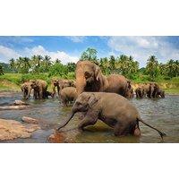 ✈Sri Lanka: 15 Tage Rundreise für 1 oder 2 Personen inkl. Badeaufenthalt, Flug und Transfer