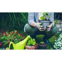 2 od. 4 Std. professionelle Gartenpflege inkl. Anfahrt & Entsorgung der Grünabfälle bei Partner & Co.(bis zu 51% sparen)