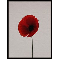 Claire Brooker - Red Poppy