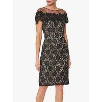 shop for Gina Bacconi Kathaleen Lace Dress, Black at Shopo