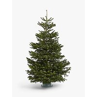 John Lewis & Partners Nordmann Fir Real Christmas Tree