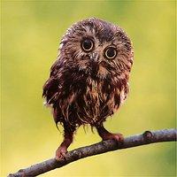 Woodmansterne Owl Blank Greeting Card