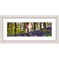 Mike Shepherd - Bluebell Woods Framed Print, 52 x 107cm