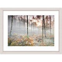 Mike Shepherd - Woodland Scene Framed Print, 81 x 107cm