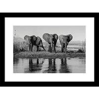 Roger Hooper - Three Elephants Framed Print, 44 x 59cm