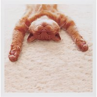 Woodmansterne Cat Lying On His Back Greeting Card
