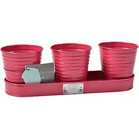 Sophie Conran for Burgon & Ball Herb Pots, Raspberry