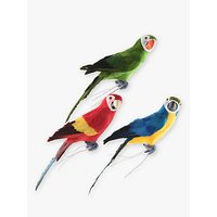 John Lewis & Partners Assorted Parrot, Assorted