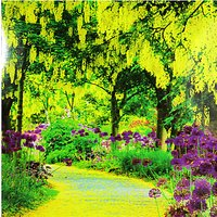 Woodmansterne Laburnum Trees Greeting Card