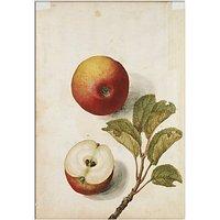 V&A - Apples Unframed Print, 30 x 40cm