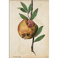 V&A - Pomegranate Unframed Print, 30 x 40cm