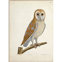 V&A - The White Owl Print, 30 x 40cm