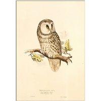 V&A - Tengmalms Owl Unframed Print, 30 x 40cm