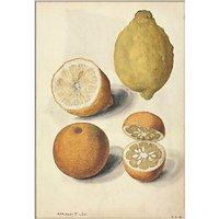 V&A - Lemons Unframed Print, 30 x 40cm