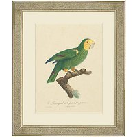 Deborah Schenck - Tropical Bird III Framed Print, 60 x 50cm