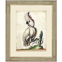 Deborah Schenck White Cockatoo III Framed Print, 60 x 50cm
