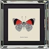 Brookpace, Entomology Collection - Diaethria Neglecta Framed Print, 56 x 56cm