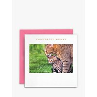 Susan O'hanlon Cat And Kitten Mother's Day Card