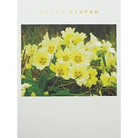 Susan O'hanlon Primroses Easter Greeting Card