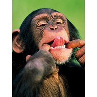 Woodmansterne Monkey Business Greeting Card