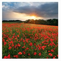 UK Greetings Poppy Field Blank Greeting Card
