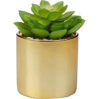 John Lewis & Partners Artificial Flat Succulent Plant in Gold Pot