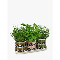 Orla Kiely Herb Pots, Pack of 3