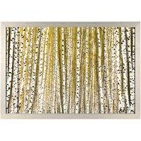 Nobilior - Silver Birch Woodland Framed Print, 75 x 108cm