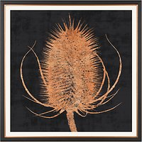 Charlotte Oakley - Copper Teasel Framed Print & Mount, 36 x 36cm, Black/Metallic