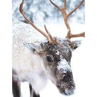 Ling Design Baby Reindeer Christmas Card