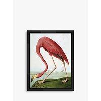 Flamingo - Audubon Framed Print, 86 x 66cm, Pink