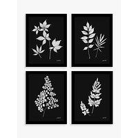 Linda Wood - Floral Framed Prints, Set of 4, 43.5 x 33.5cm, Black/White